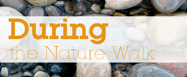 Things to do during your nature walk • Jimmie's Collage