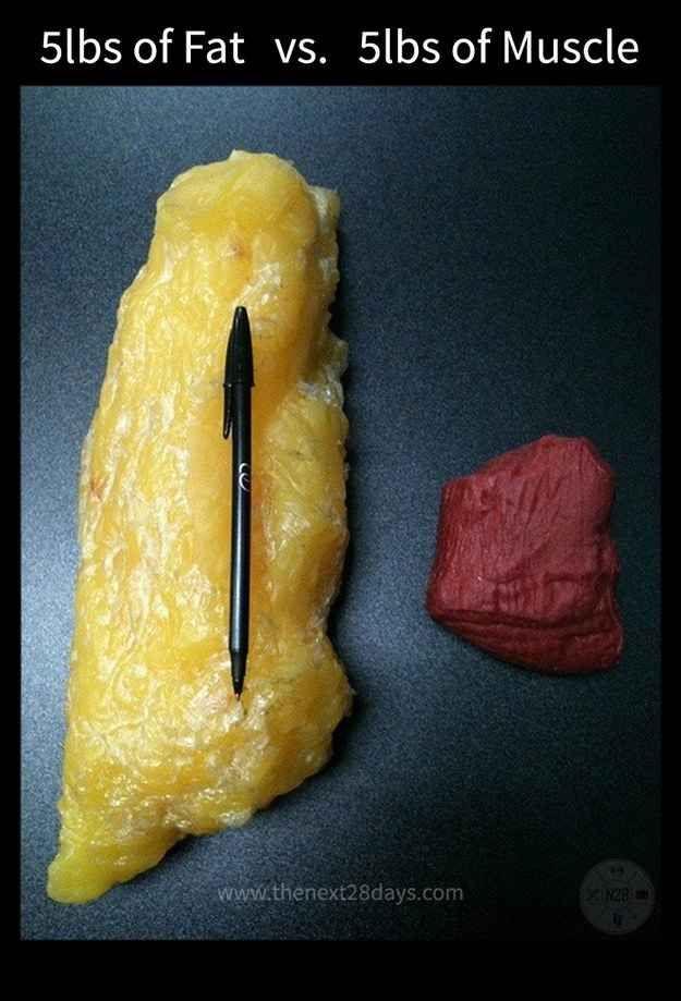muscle-fat