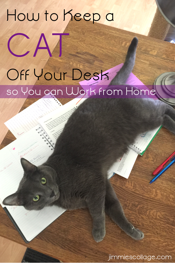 How to Keep a Cat Off Your Desk So You can Work from Home